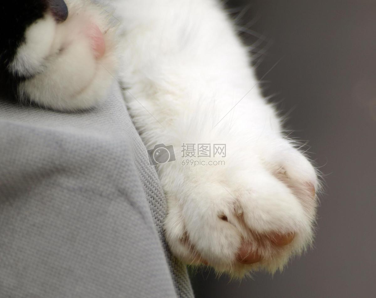 猫的爪子图片