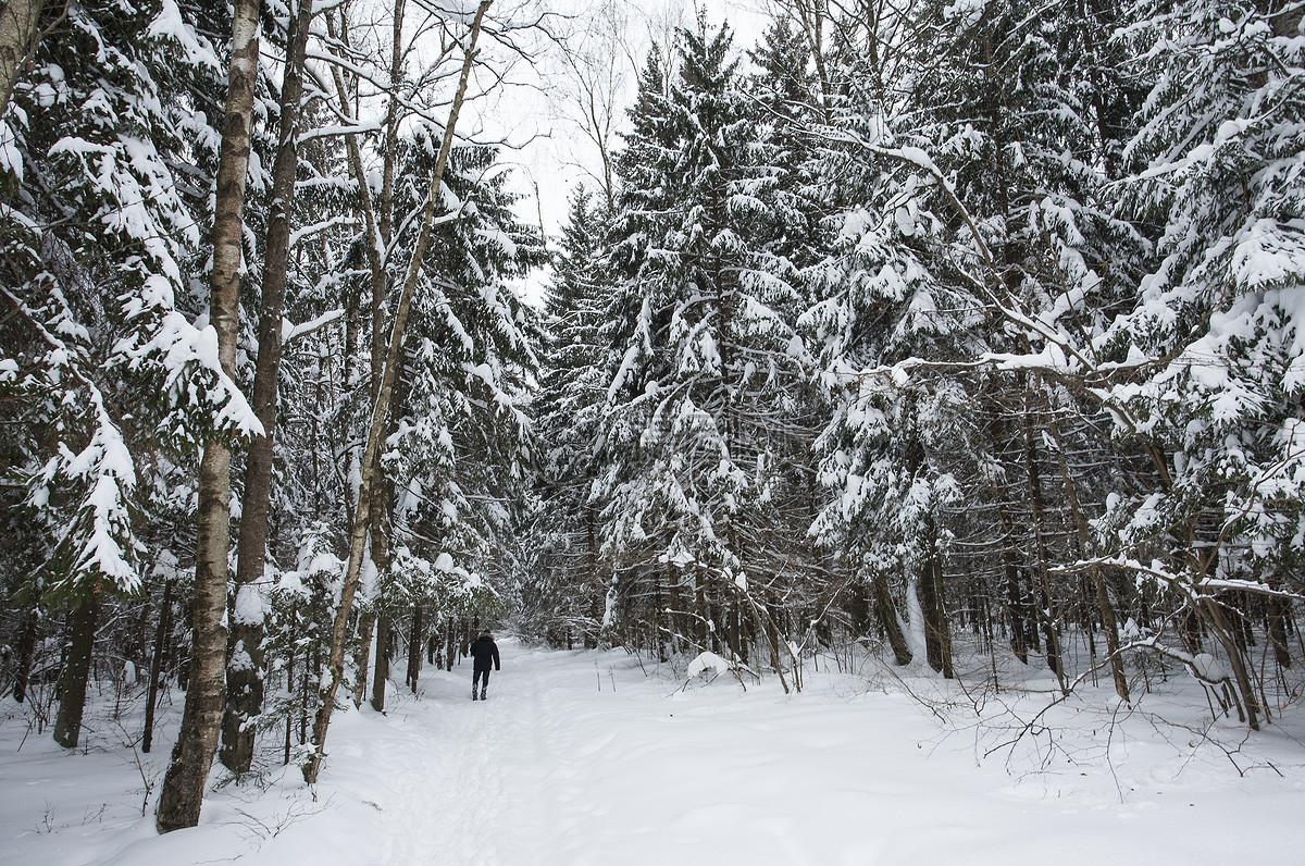图片 照片 自然风景 冬季jpg