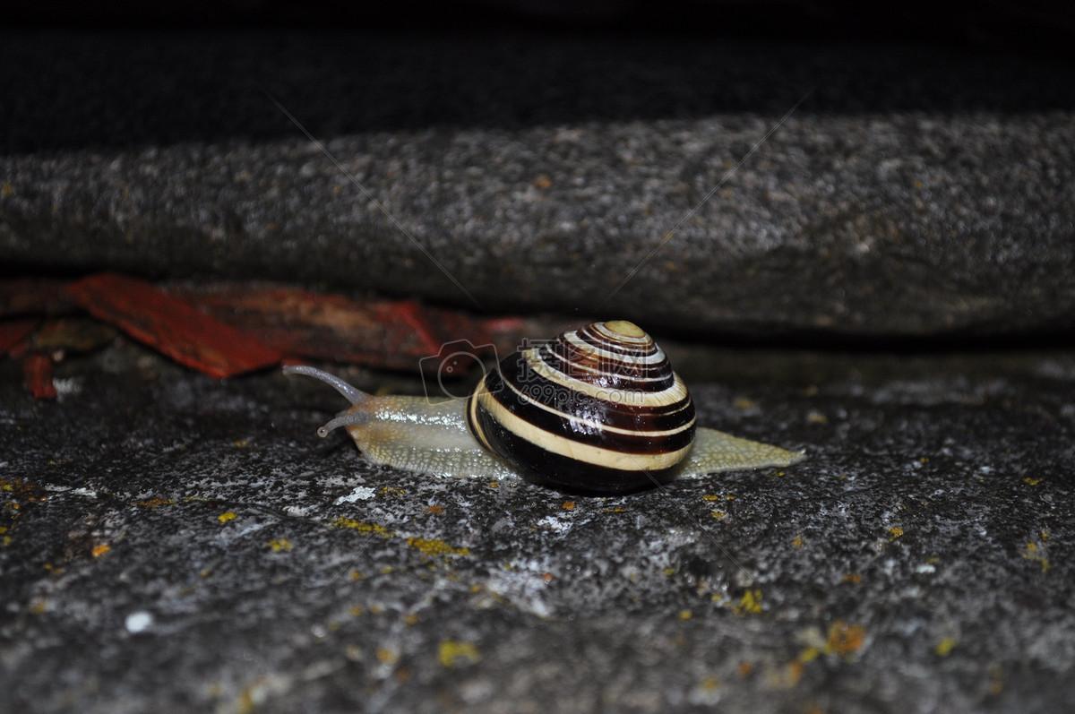 壁纸 动物 两栖 蛇 蛙 1200_797