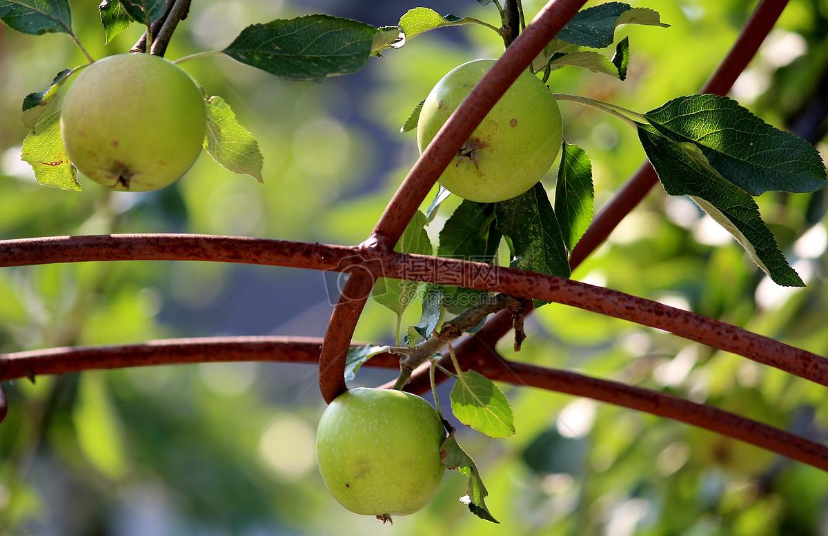 苹果做动物造型图片