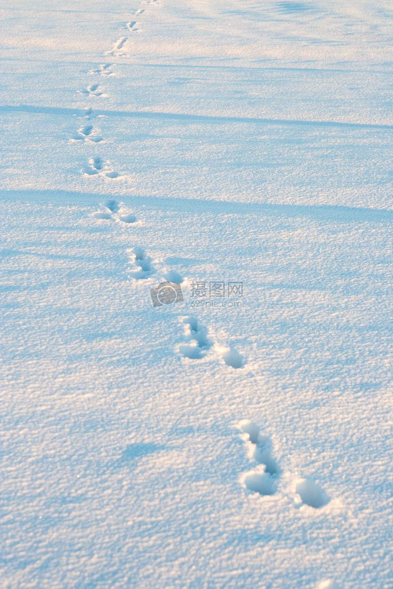 雪地里的动物足迹图片