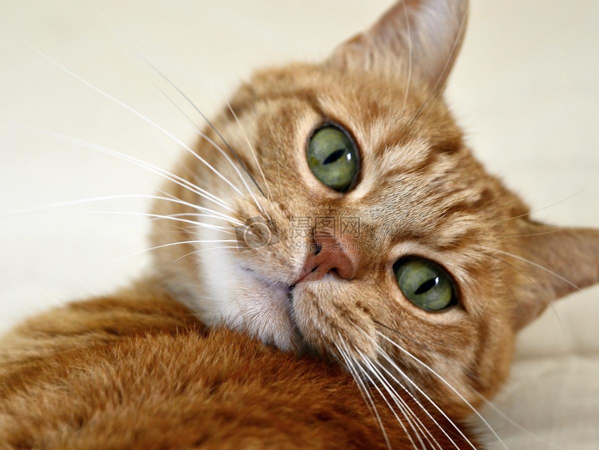 壁纸 动物 猫 猫咪 小猫 桌面 1200_902