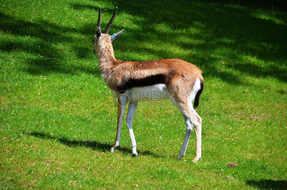 世界上有哪些动物据动物学家统计,目前地球上已知的动物大约有150万种