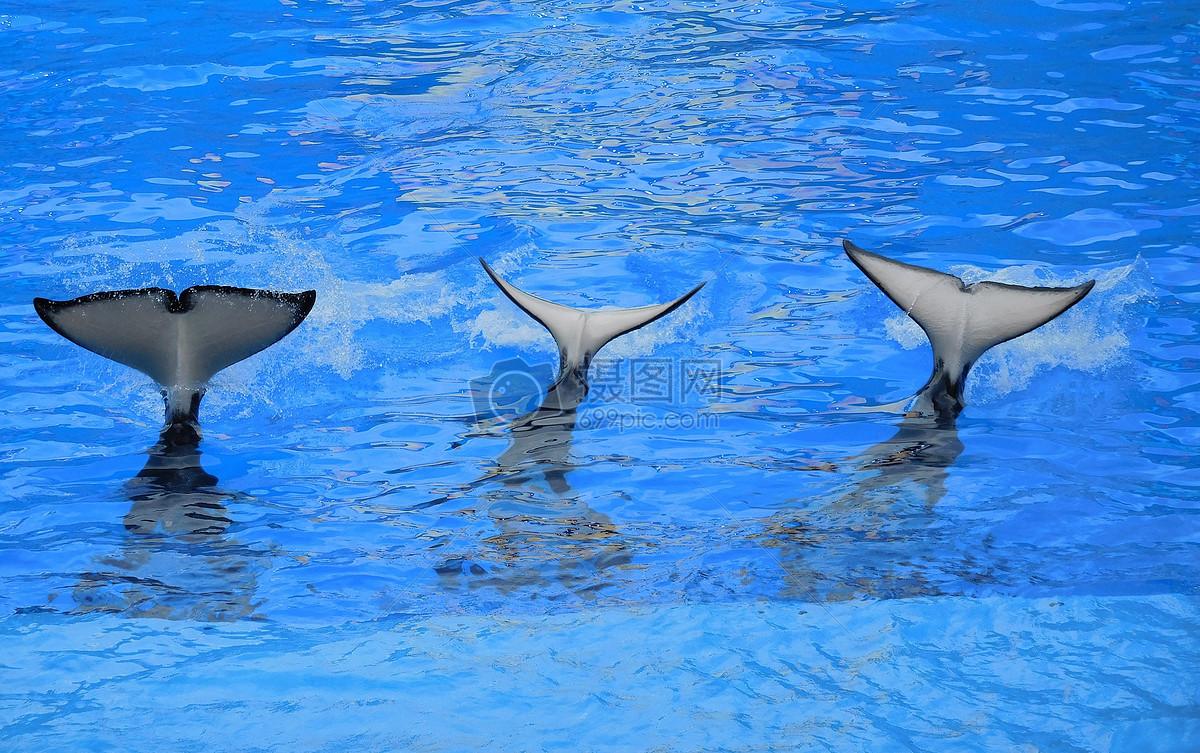 海豚尾巴图片免费下载 版权申明:本网站所有vrf协议图片及素材均由本