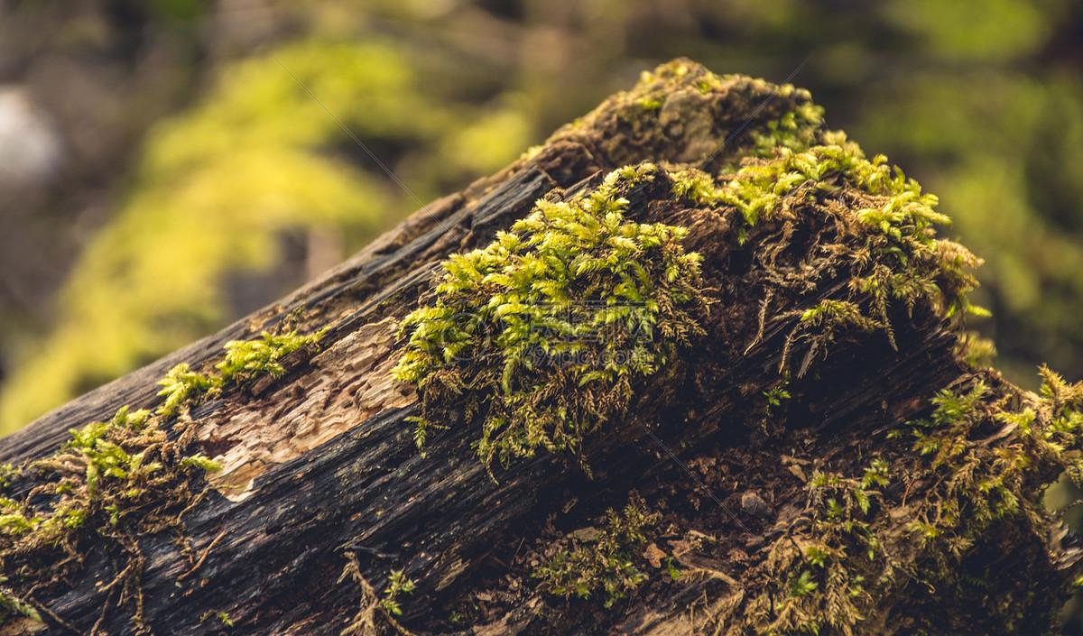 qq空间 新浪微博  花瓣 举报 标签: 敌意日志森林湿绿色自然苔自然