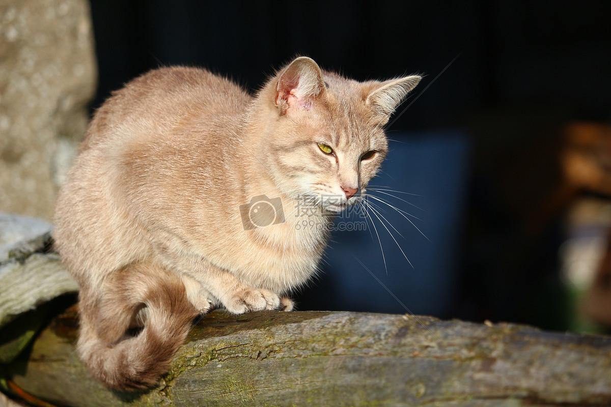 发怒的花纹猫咪