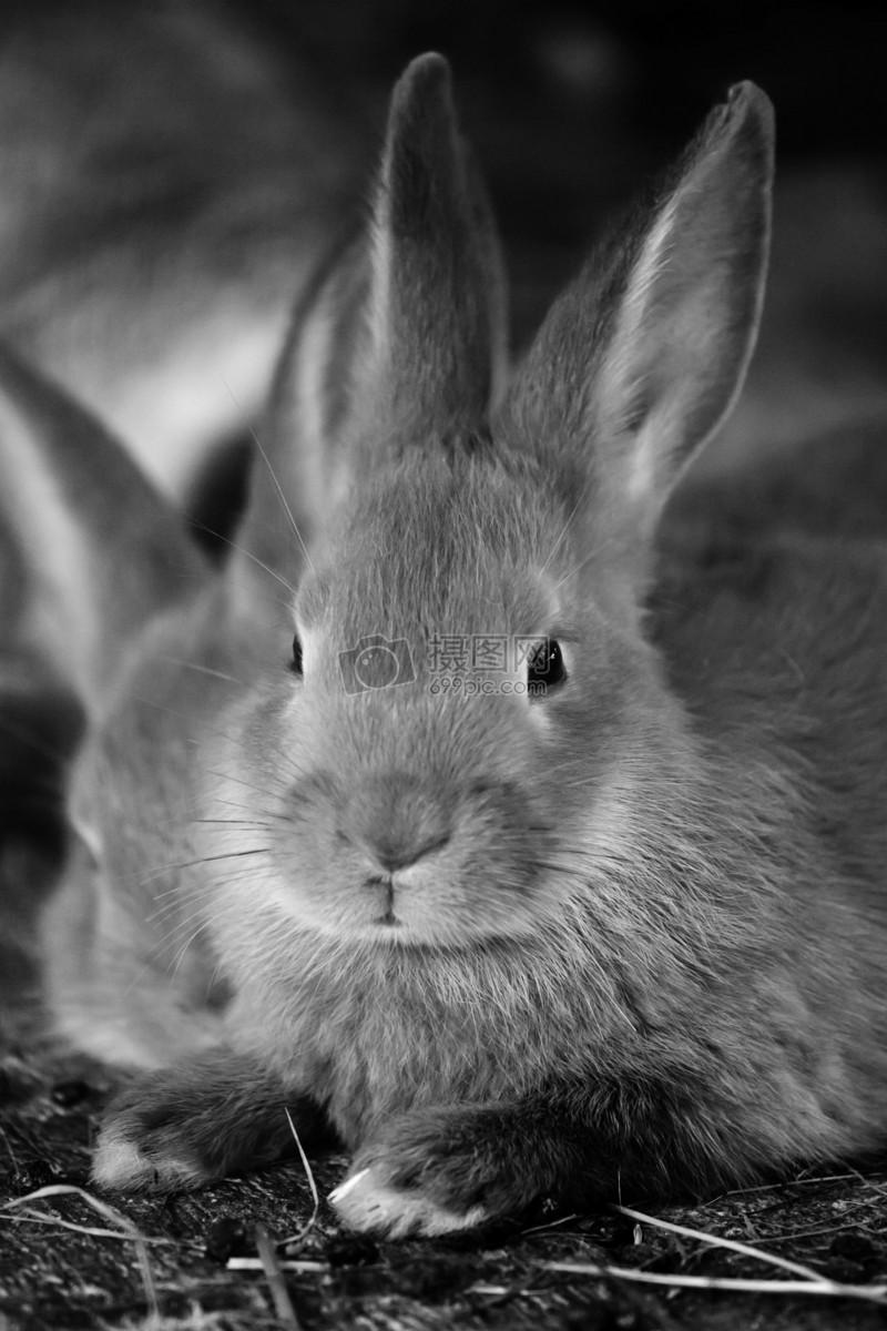 呆萌的小兔子