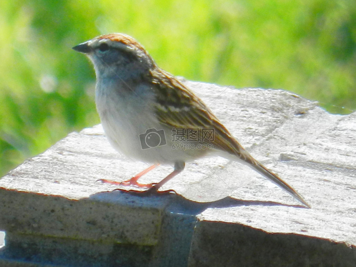 鸟类动物石椅图片