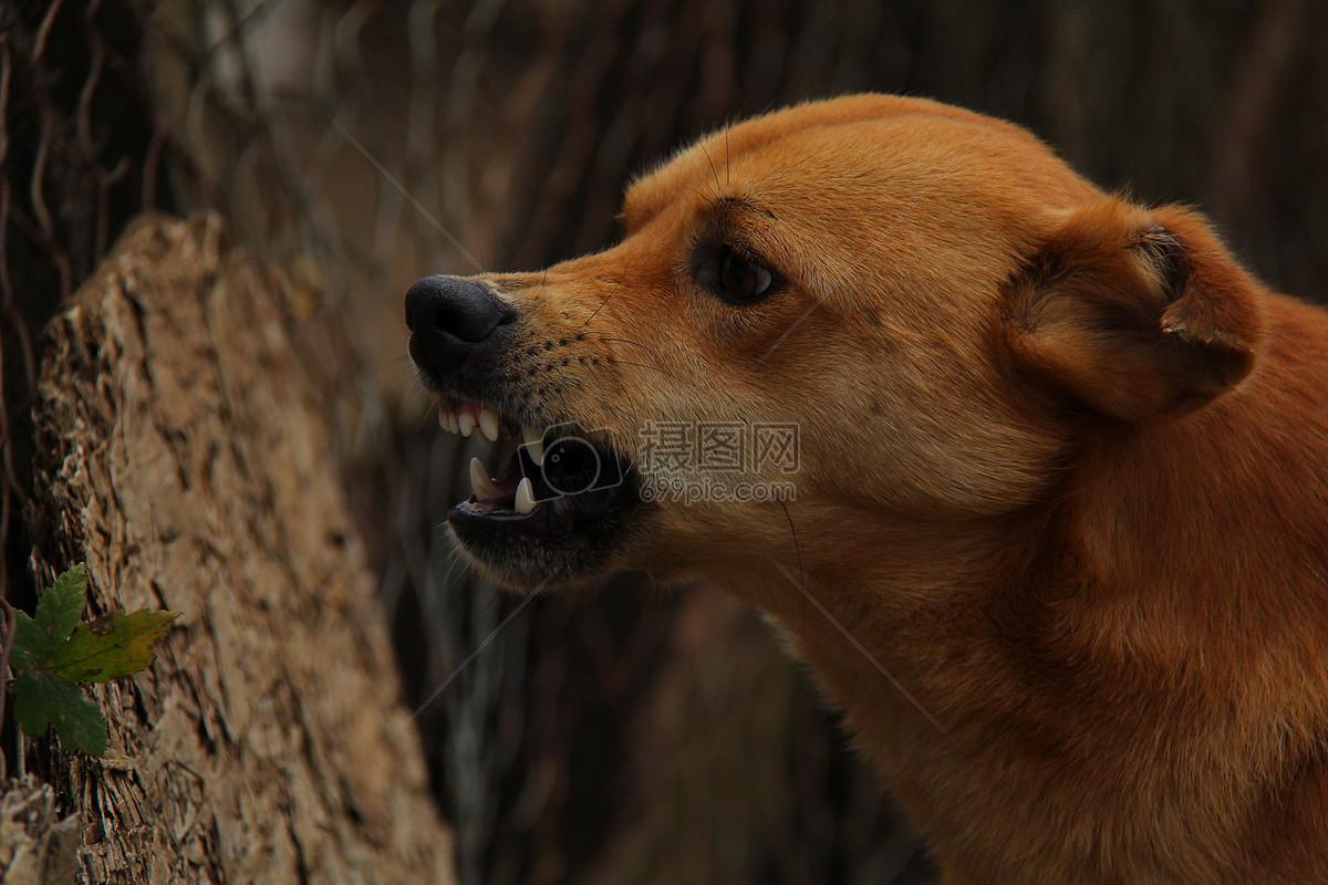 树木和张嘴的黄狗