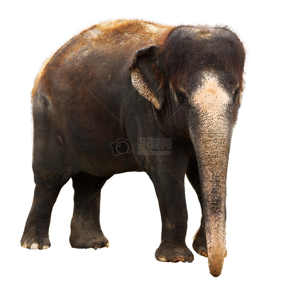 唯美图片 餐饮美食 长鼻子的大象jpg  分享: qq好友 微信朋友圈 qq