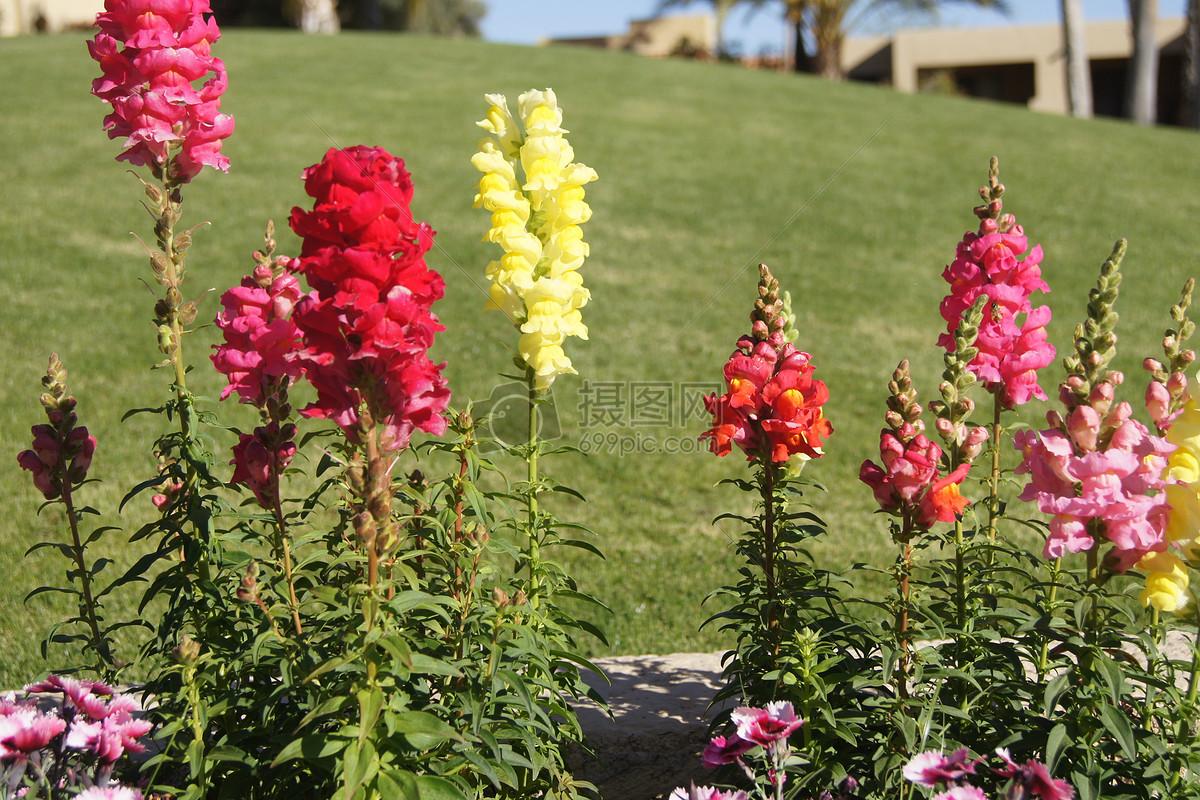 照片 自然风景 各式的花朵jpg