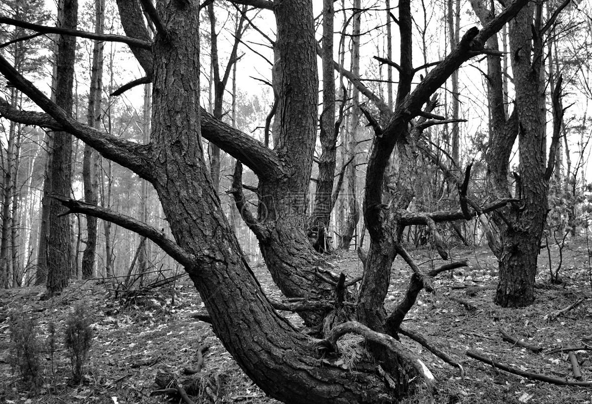 枯萎的树木树干图片素材_免费下载_jpg图片格式_高清