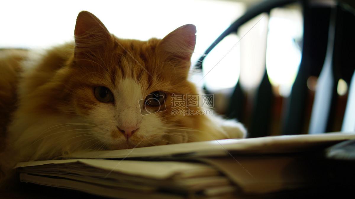 壁纸 动物 猫 猫咪 小猫 桌面 1200_675