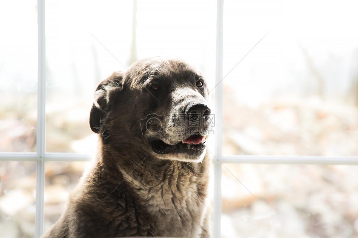 笼中动物痛苦图片