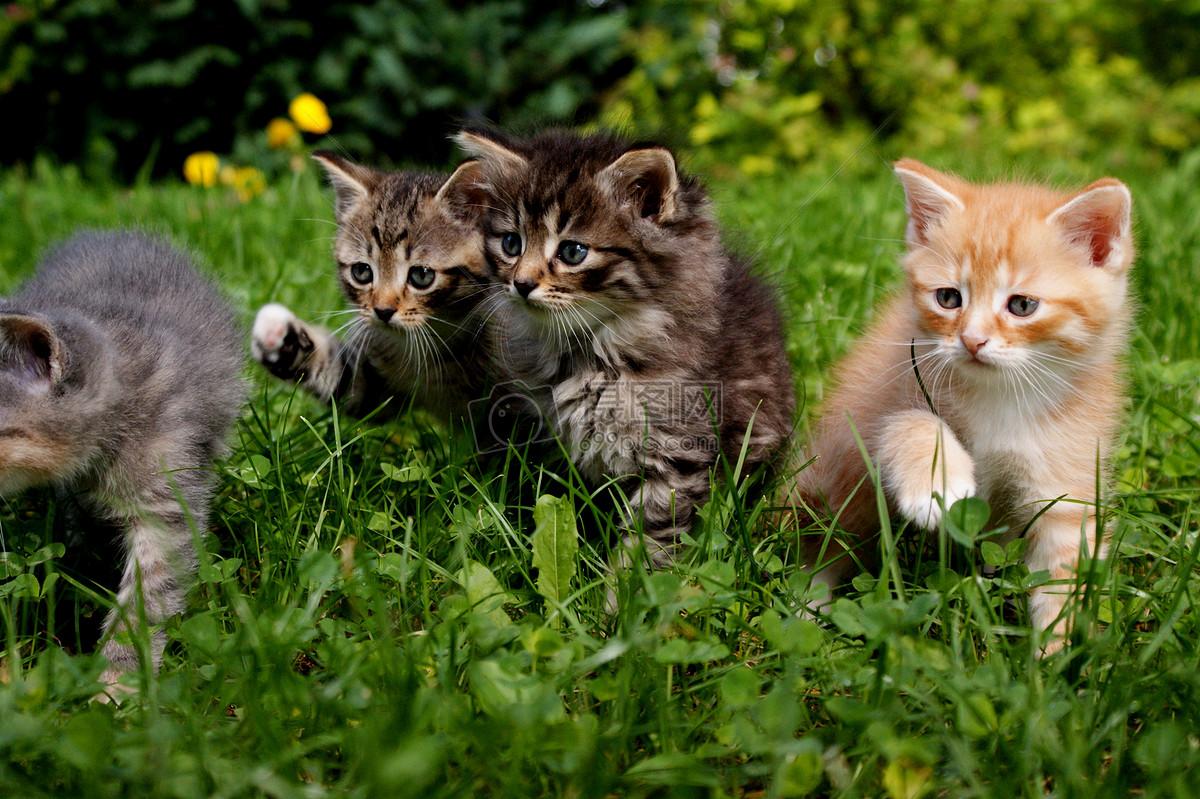 壁纸 动物 猫 猫咪 小猫 桌面 1200_799