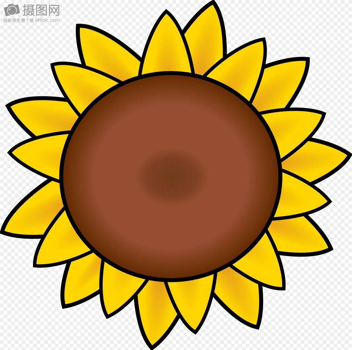 美丽的向阳花