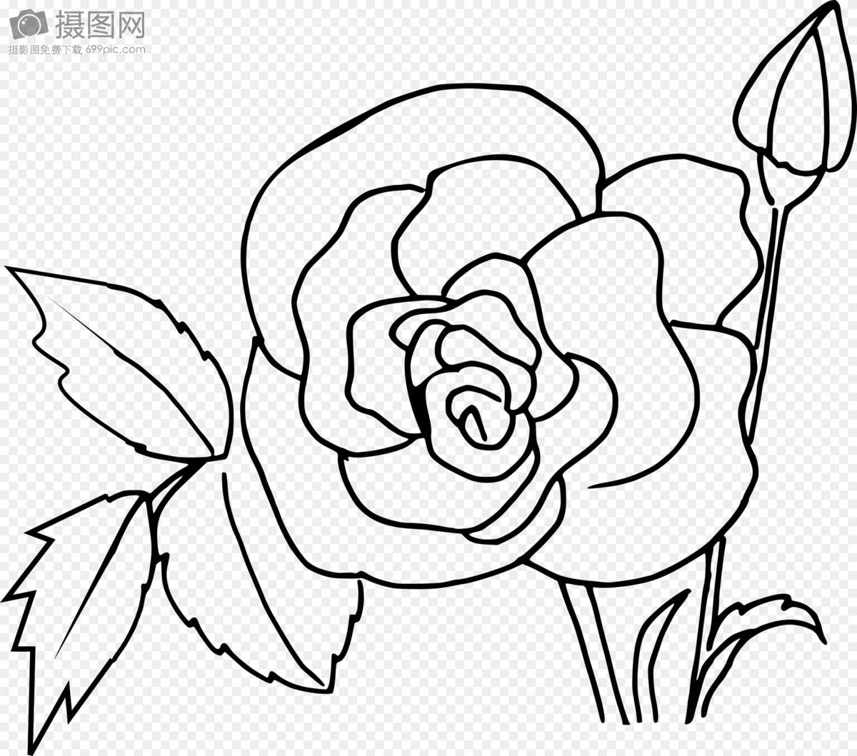 玫瑰花手绘图图片