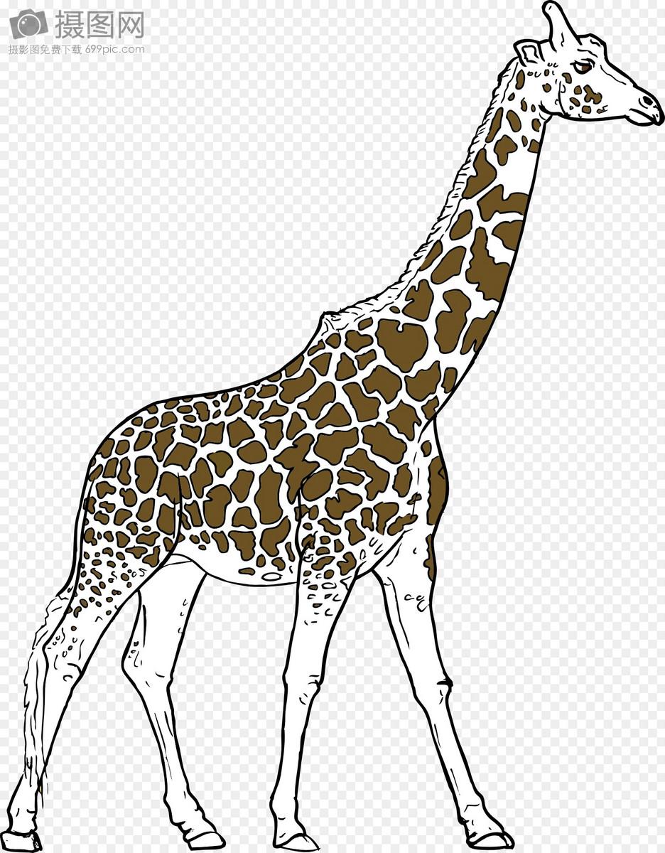 长颈鹿, 动物,摄影图片照片免费下载,正版图片编号,就