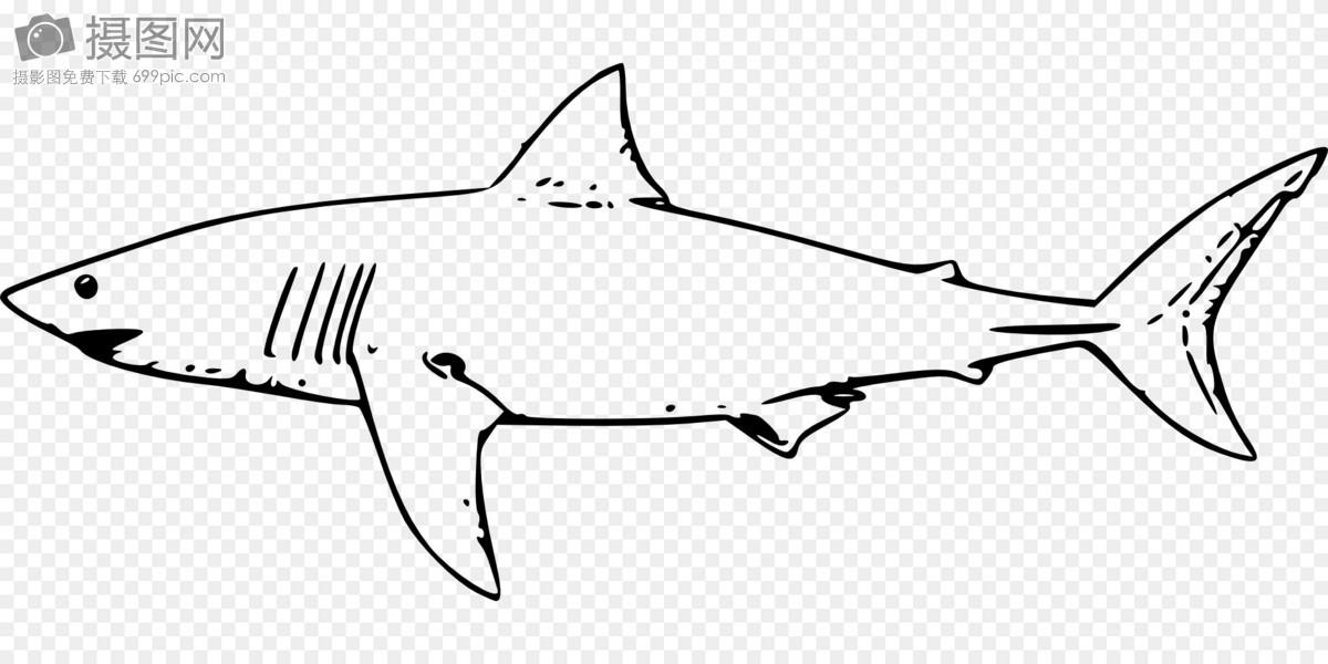 鲨鱼手绘图片大全