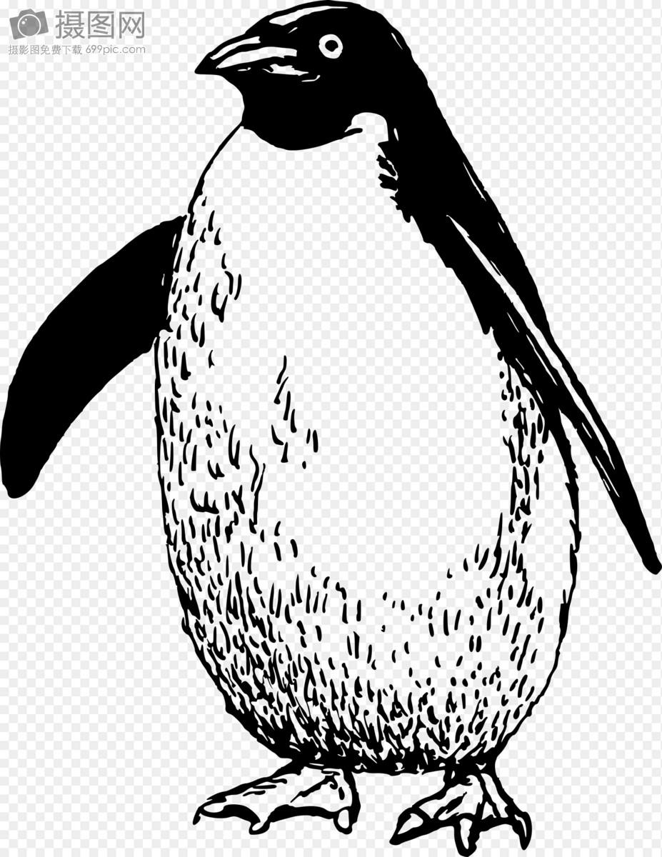 企鹅图片简笔画