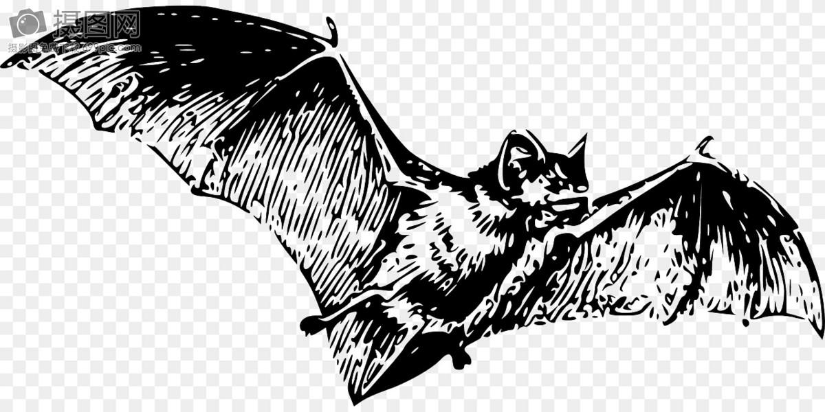 蝙蝠摄影图片照片免费下载,正版图片编号1121282,搜索