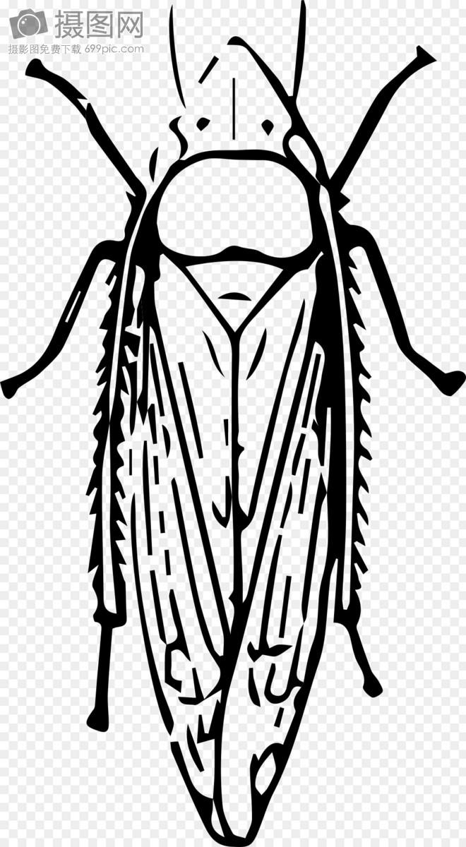 可爱小甲虫简笔画