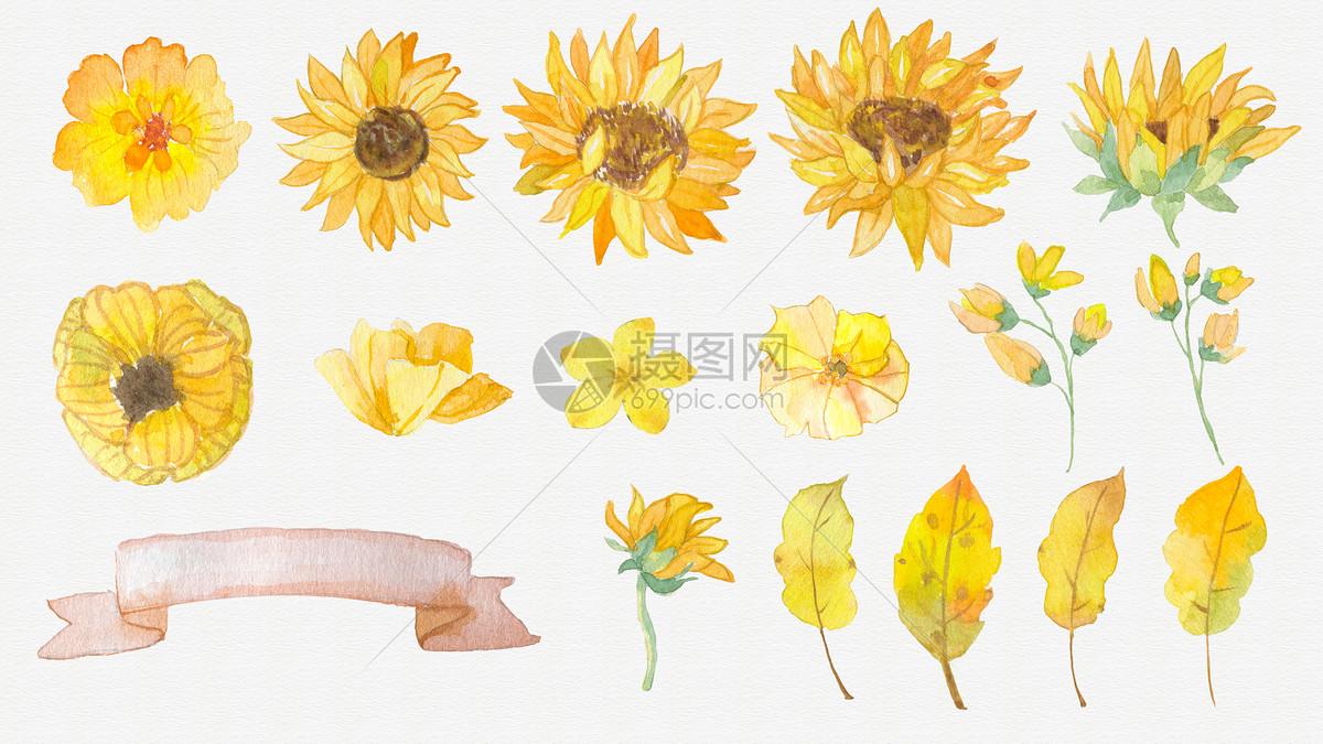 水彩花朵叶子素材