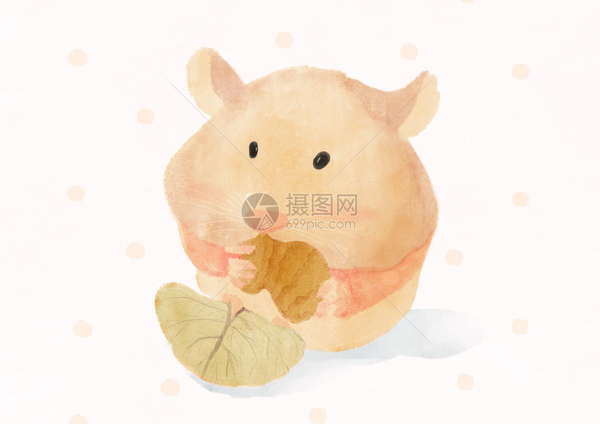 小仓鼠手绘插画