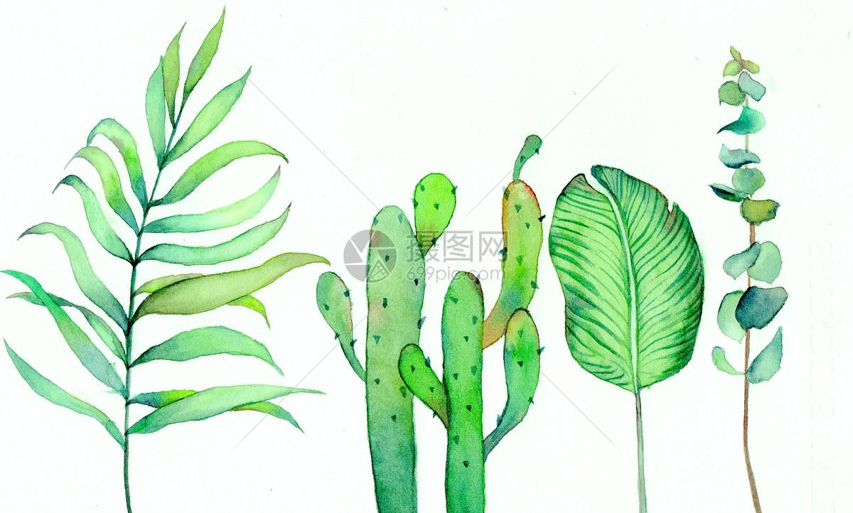 水彩北欧绿植手绘