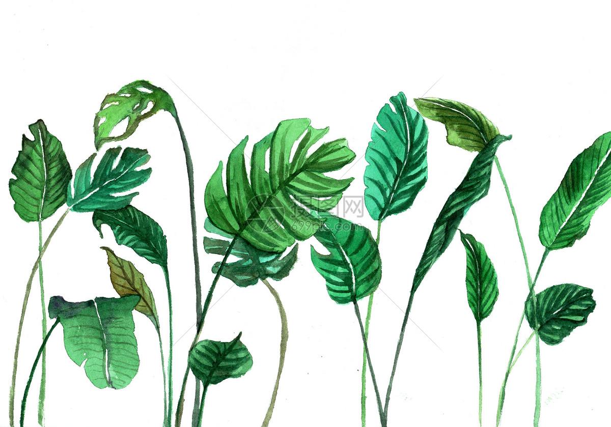 >>水彩手绘ins风ins绿植元素图片叶子图片插画图片植物素材图片热带植