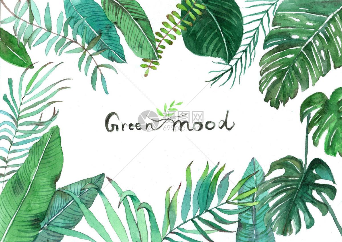 手绘植物北欧绿植北欧风小清新水彩手绘北欧绿植图片水彩手绘北欧绿植