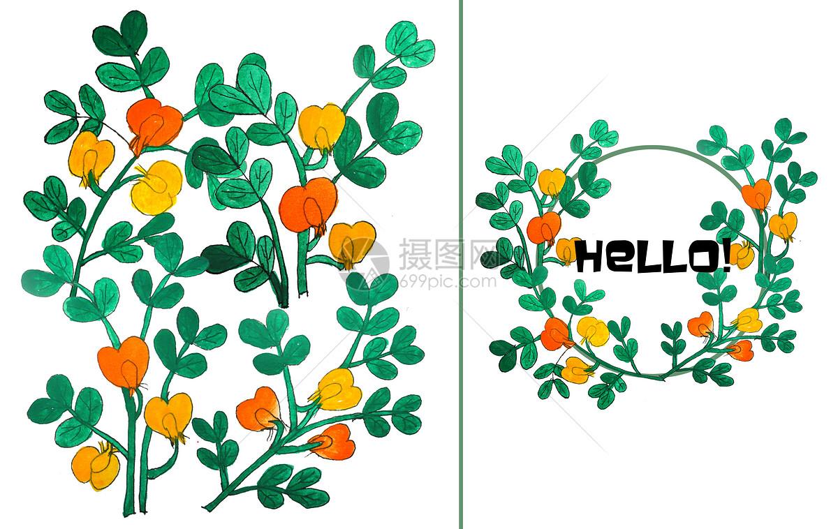 手绘水彩花生的花