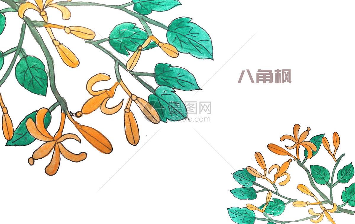 手绘水彩中药材八角枫