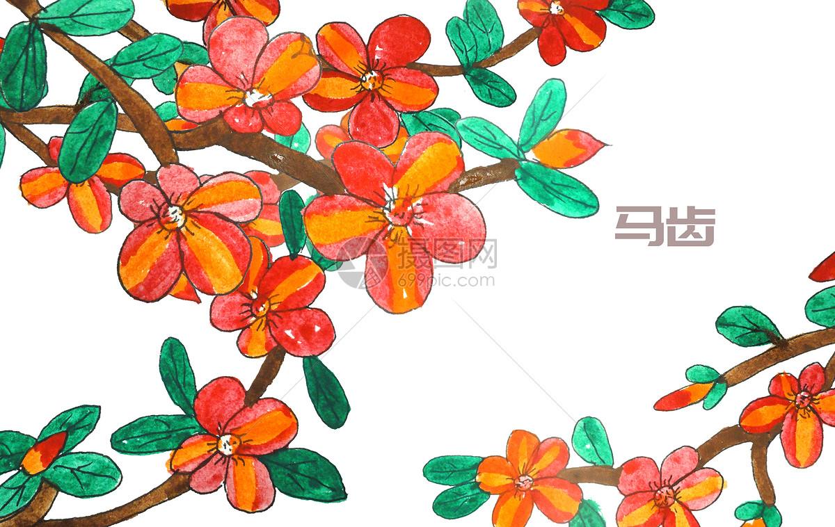 手绘水彩中药材马齿笕图片素材_免费下载_psd图片格式