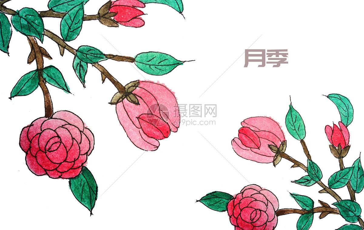 手绘水彩中药材月季