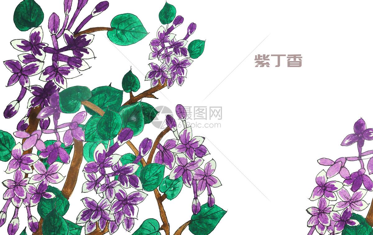 手绘水彩紫丁香花