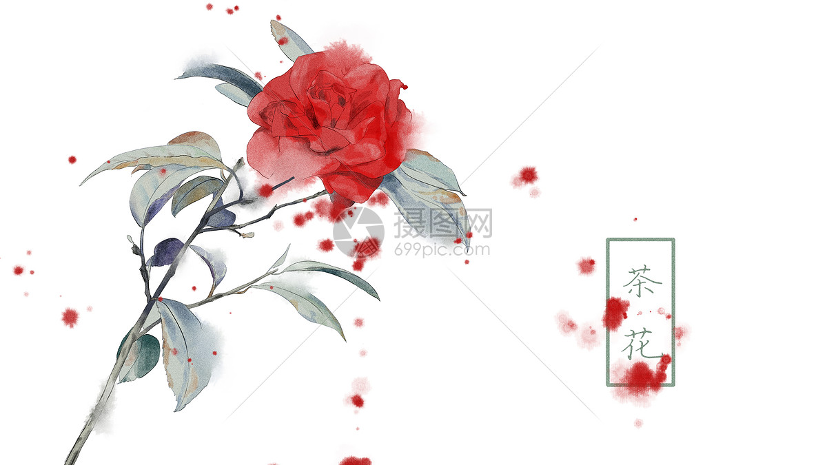 中国风手绘茶花插画