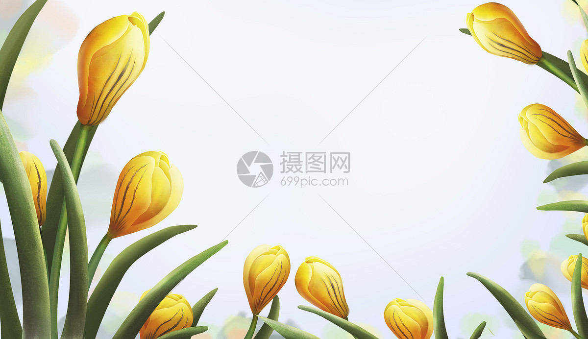 花卉插画图片