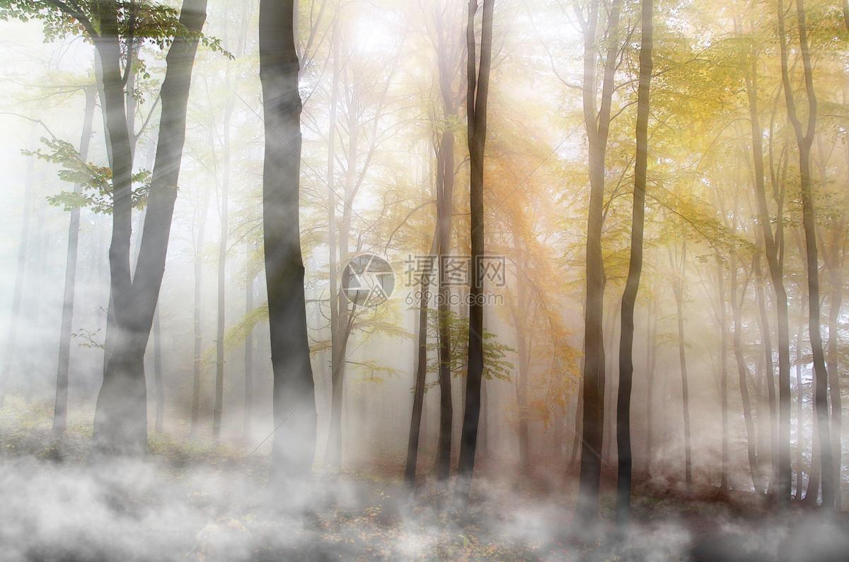 梦幻树林图片