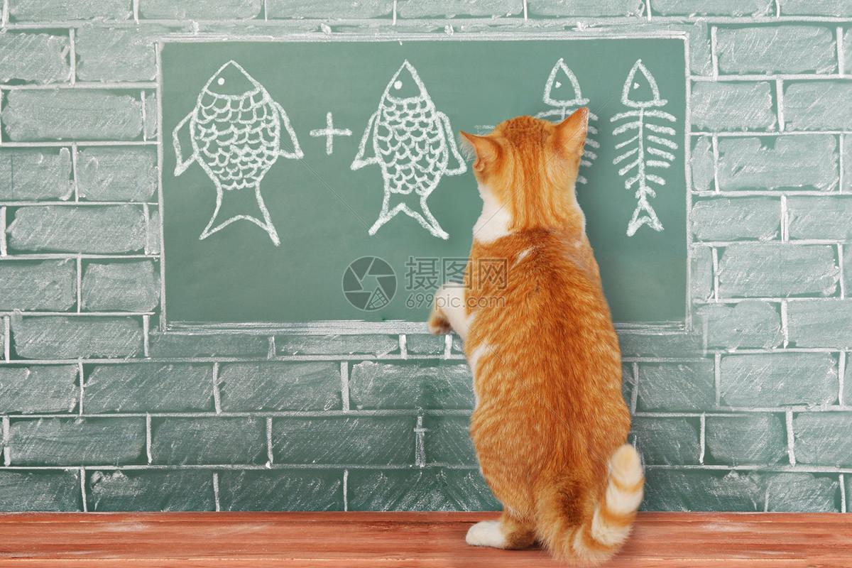 猫与数学图片