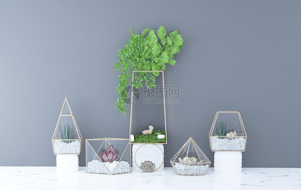 植物盆栽图片