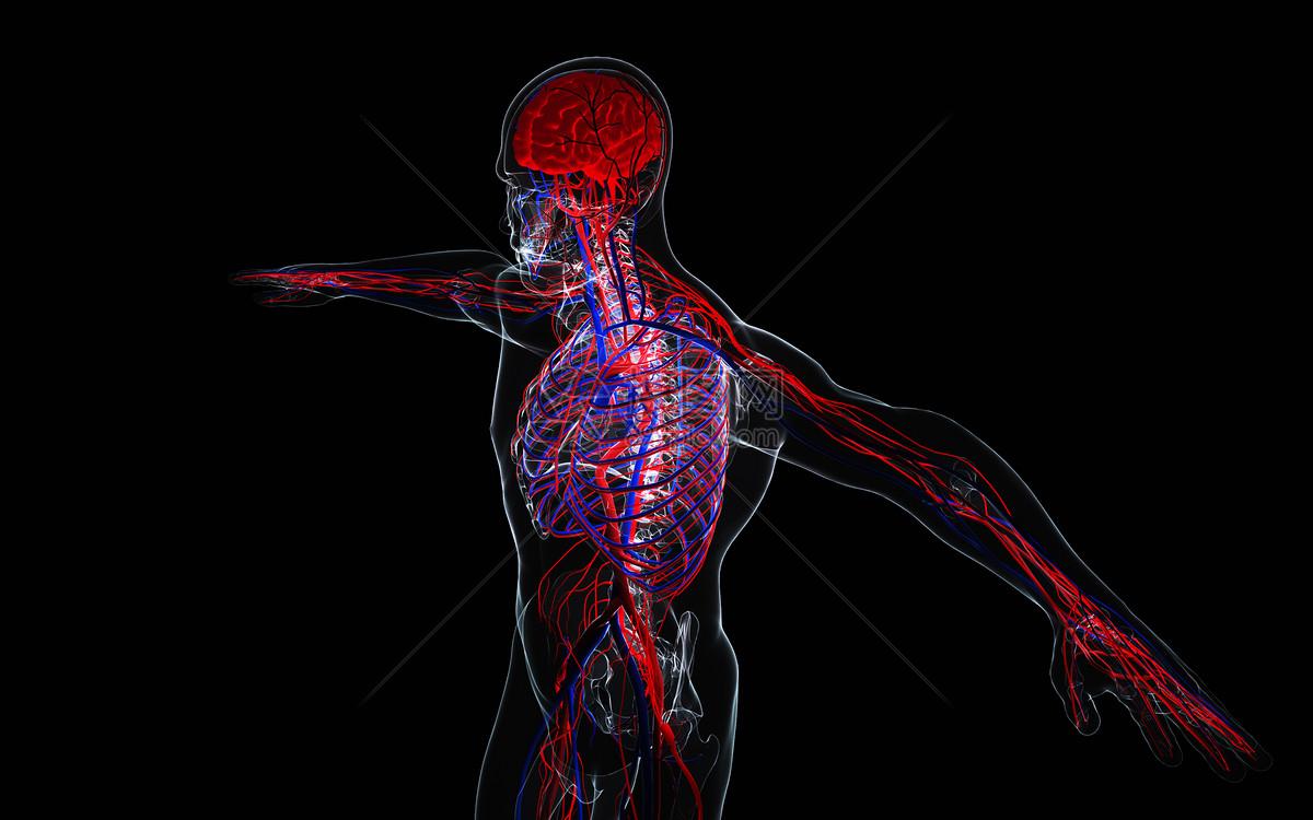 人体透视图图片