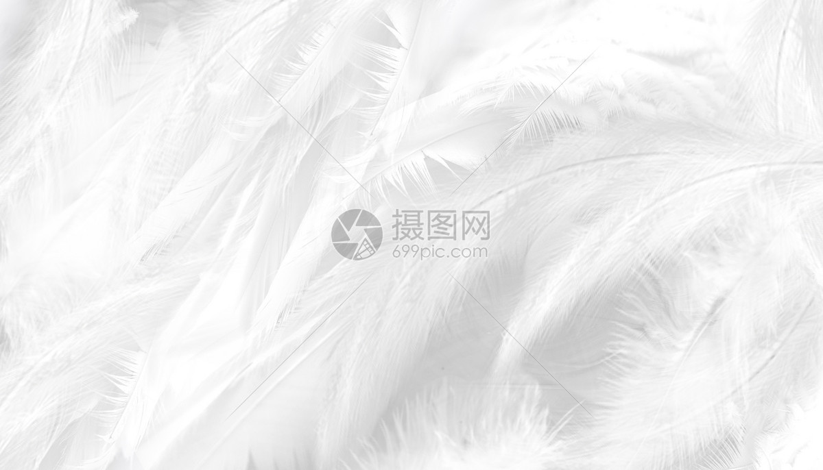 白色羽毛背景图片