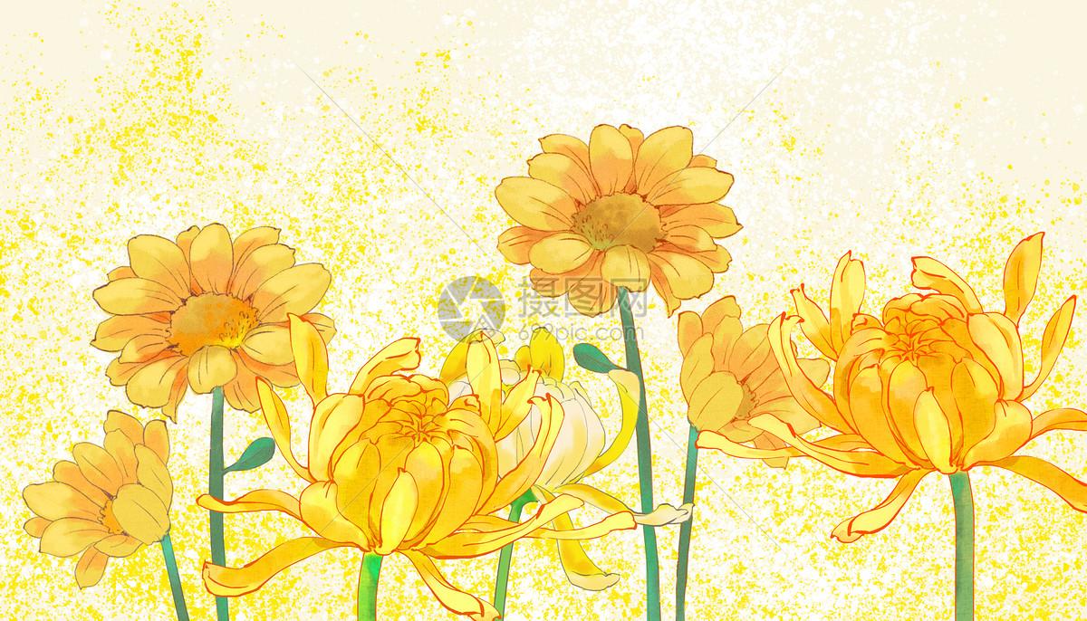 写实金丝菊背景特写图片