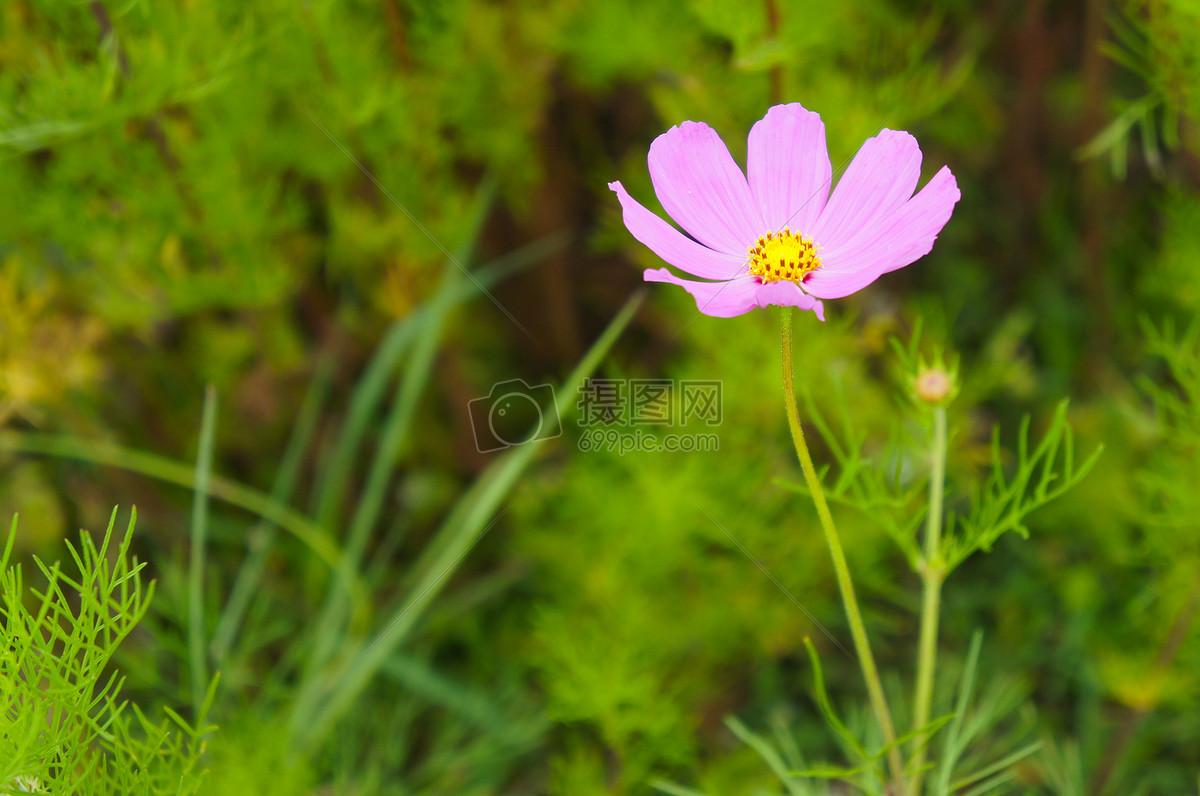 花朵盛开图片