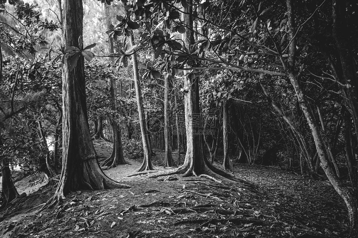 黑白色的森林图片