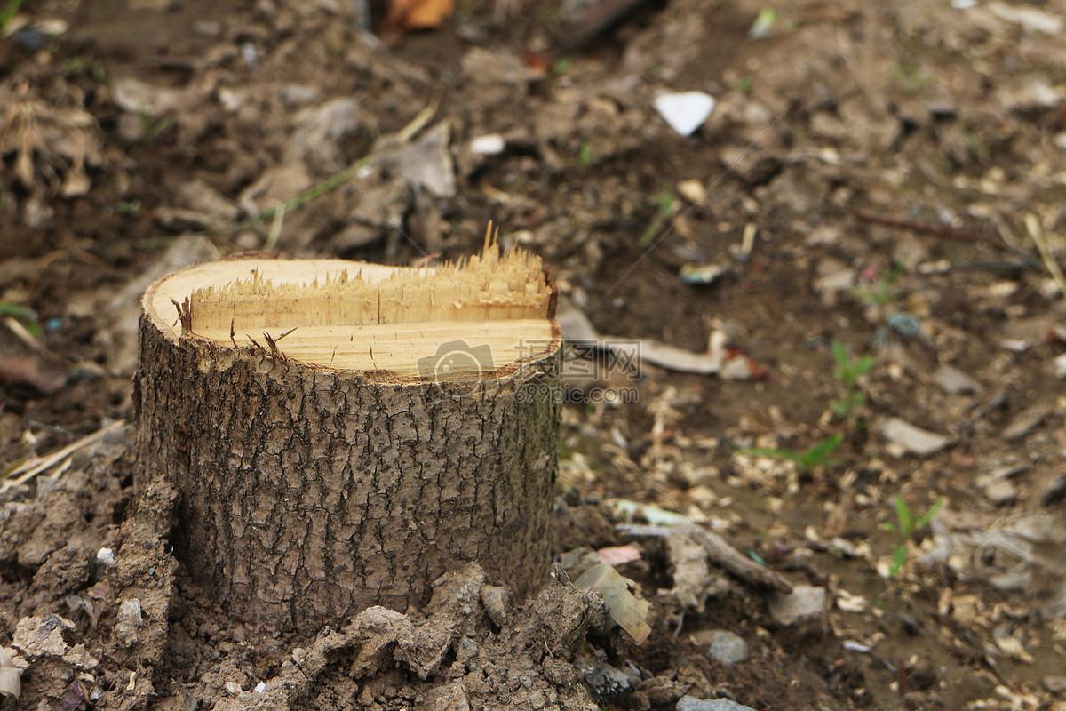 马克笔手绘木桩