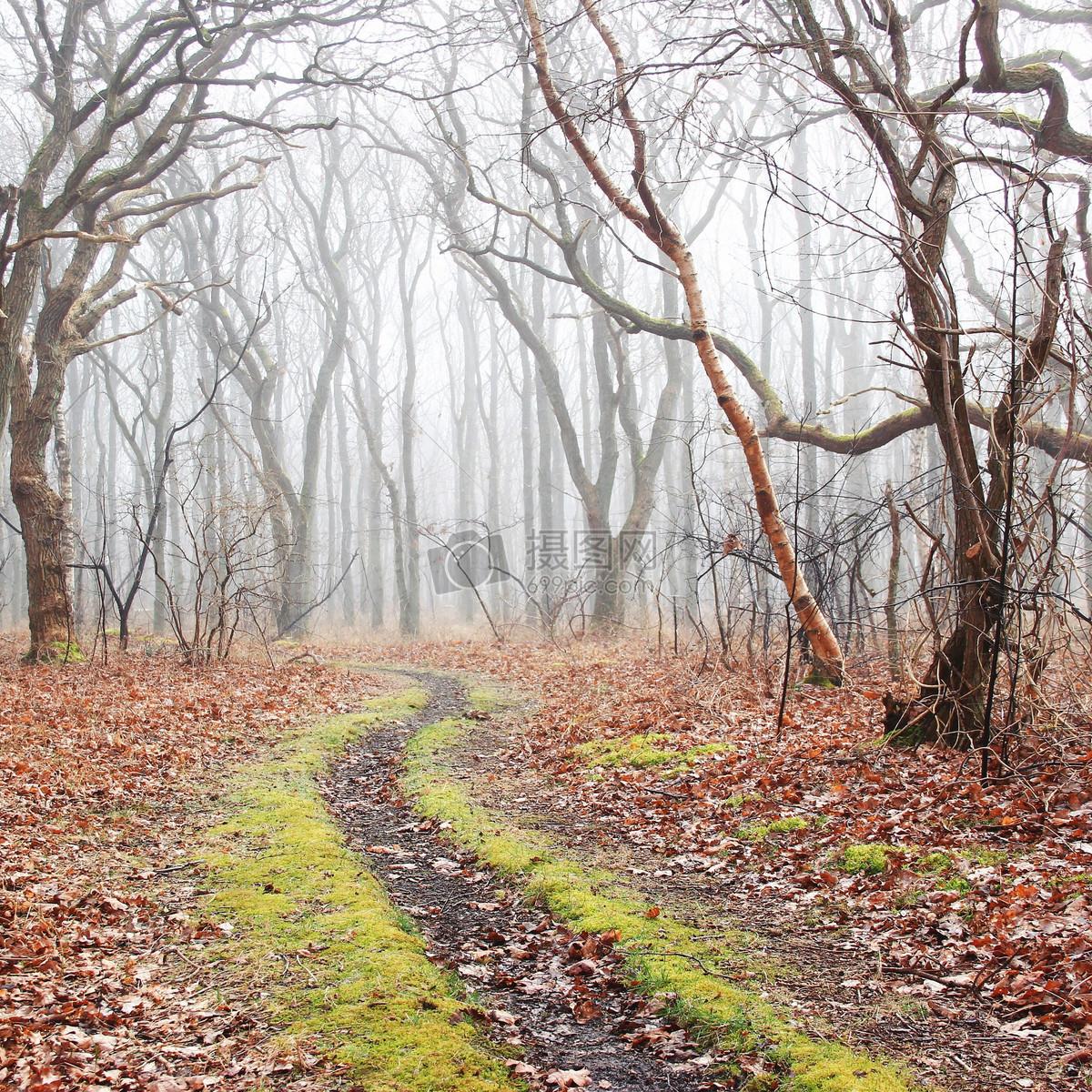 唯美图片 自然风景 森林里的泥泞小路jpg  分享: qq好友 微信朋友圈