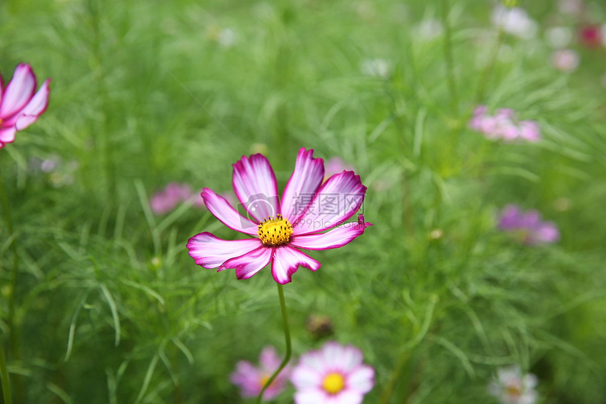 红色小花 紫色 花花草草 花草 自然风景 枫叶 红色叶子 景观 花朵