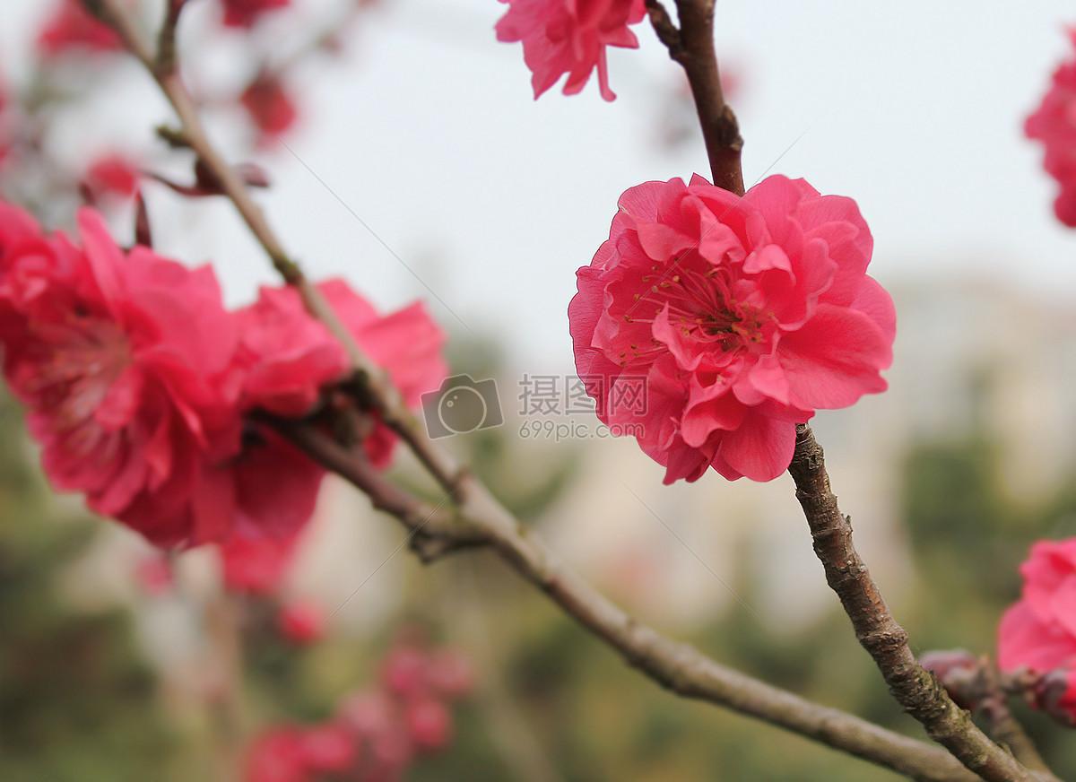 枫叶 红色叶子 景观 花朵 小花jpg  分享: qq好友 微信朋友圈 qq空间
